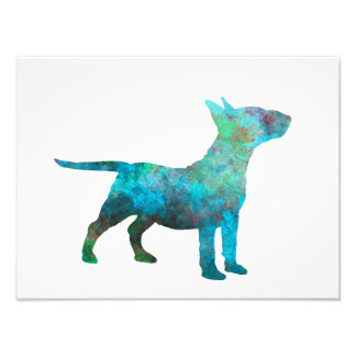 Miniature Bull terrier in watercolor Photo Print