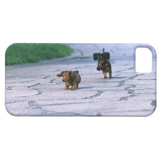 Miniature Dachshund 3 Barely There iPhone 5 Case