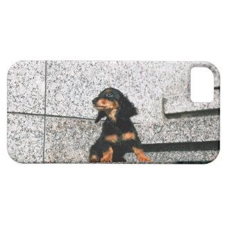 Miniature Dachshund 4 iPhone 5 Case