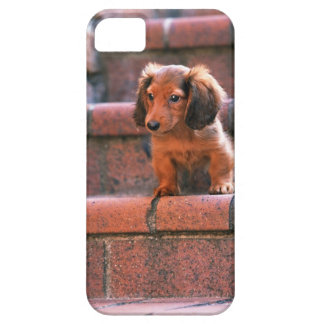 Miniature Dachshund Case For The iPhone 5
