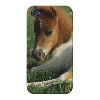 Miniature Foal Laying Down iPhone 4/4S Case