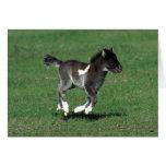 Miniature Foal Running Greeting Card