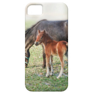 Miniature Horse Foal - Customized Colt & Filly iPhone 5 Cases