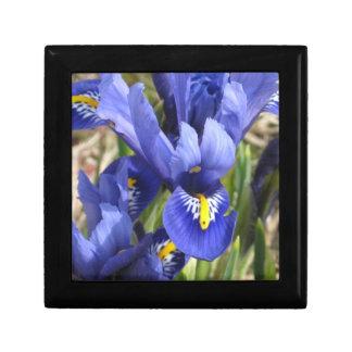 Miniature Iris Gift Box