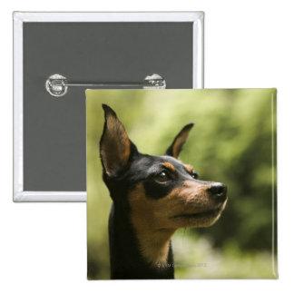 Miniature Pinscher (Min-Pin) 15 Cm Square Badge