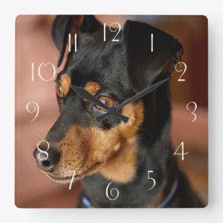 Miniature pinscher square wall clock