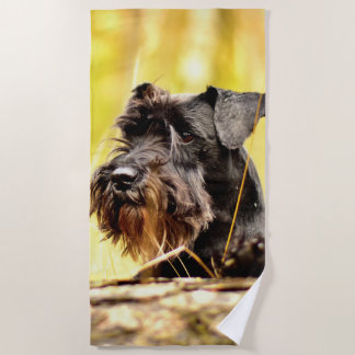 Miniature-schnauzer Beach Towel