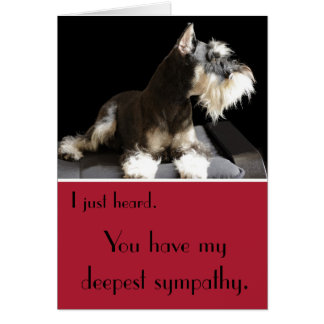 Miniature Schnauzer belated sympathy Card