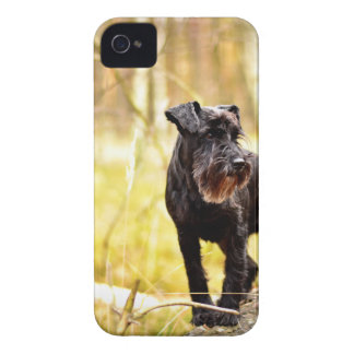 miniature-schnauzer iPhone 4 covers