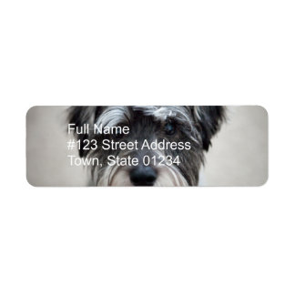 Miniature Schnauzer Return Address Label