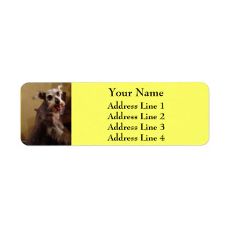 Miniature Schnauzer Yellow Return Address Labels
