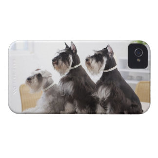 Miniature Schnauzers sitting at edge of table iPhone 4 Case