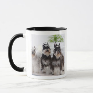 Miniature Schnauzers standing at edge of table Mug