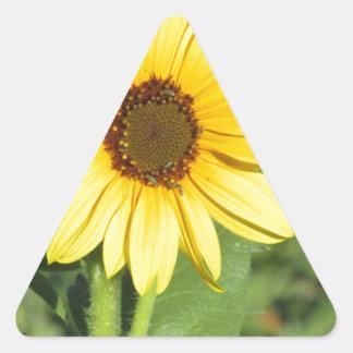 Miniature Wild Sunflower Bloom Stickers