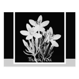 Minimalist Floral B & W Postcard