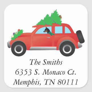Mininature Pinscher driving a Christmas car Square Sticker