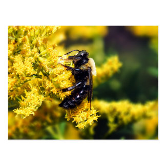 Mining Bee on Goldenrod Flowers Postcard