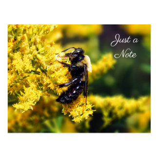 Mining Bee on Goldenrod Just a Note Postcard