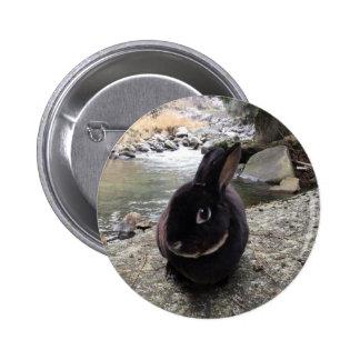 MiniRex rabbit Dad Edward 5.7CM round badge