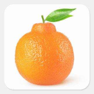 Minneola tangelo citrus fruit square sticker