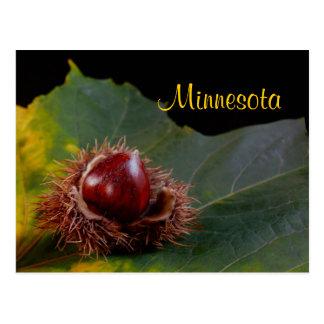 Minnesota, Autumn Leaf With Nut Postcard