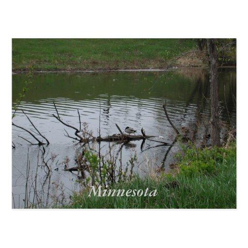 Minnesota Post Card