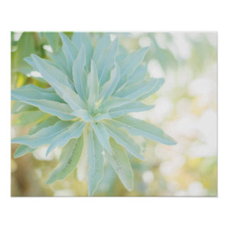 Mint Green Succulent Cactus Flower Nature Fine Art Poster