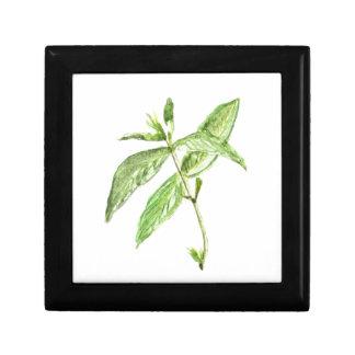 Mint herb gift box