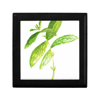 Mint herb Mint watercolour Mint print Gift Box