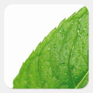 Mint Leaf Square Sticker