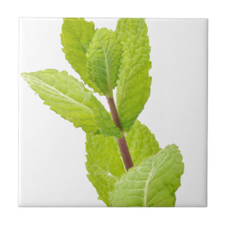 Mint leaves ceramic tile