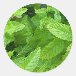 Mint Round Sticker