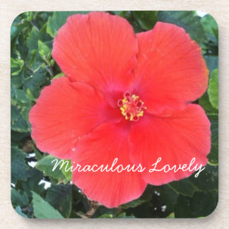 Miraculous Lovely Red Flower Beverage Coasters