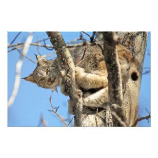 Mischievous Lynx Photographic Print