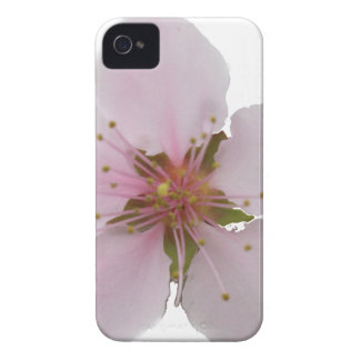 Miso Yummy Cherry Blossoms iPhone Case iPhone 4 Cover