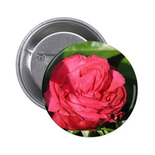 Miss All-American Beauty Hybrid Tea Rose 097 Button