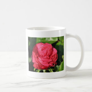 Miss All-American Beauty Hybrid Tea Rose 097 Classic White Coffee Mug