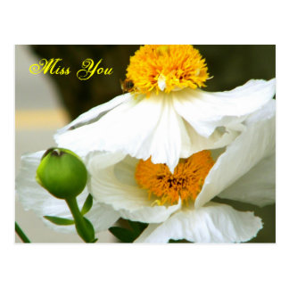 Miss You/Any Occasions_ Postcard Postcard