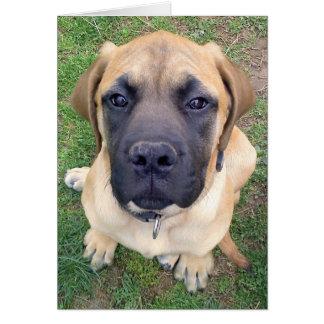Miss You- cute English Mastiff dog photo Card