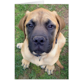 Miss You  (English Mastiff) greeting card