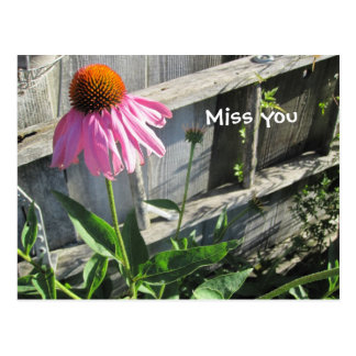 Miss you pink Daisy Postcard