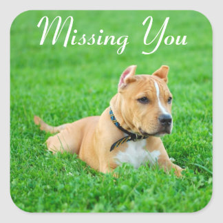 Miss You Pitbull Puppy Dog Greeting Stickers