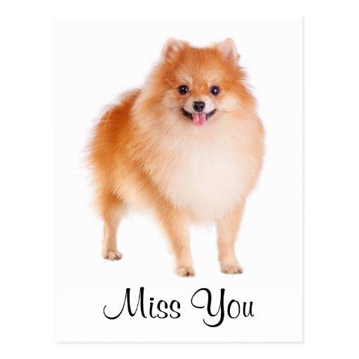 Miss You Pomeranian Puppy Dog Greeting Postcard
