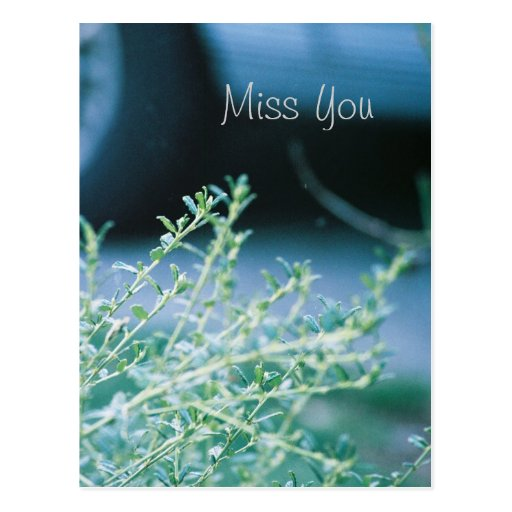 Miss You- post card