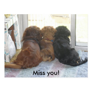 Miss you puppies postcard