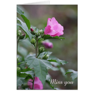 Miss You Rose of Sharon Floral Bloom Greeting Card