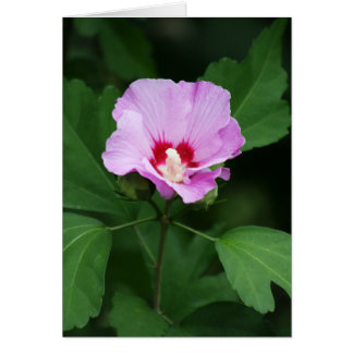 Miss You So Much Summer Rose of Sharon Floral Greeting Card