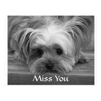 Miss You Yorkshire Terrier  Puppy Dog Postcard