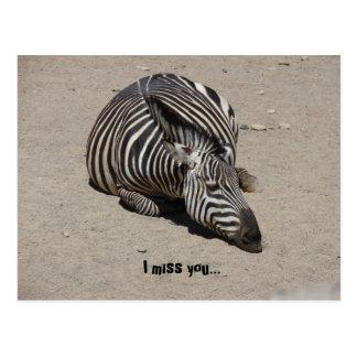 Miss You Zebra Postcard
