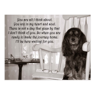 Missing You: A Cavalier KIng Charles Spaniel Card Post Card